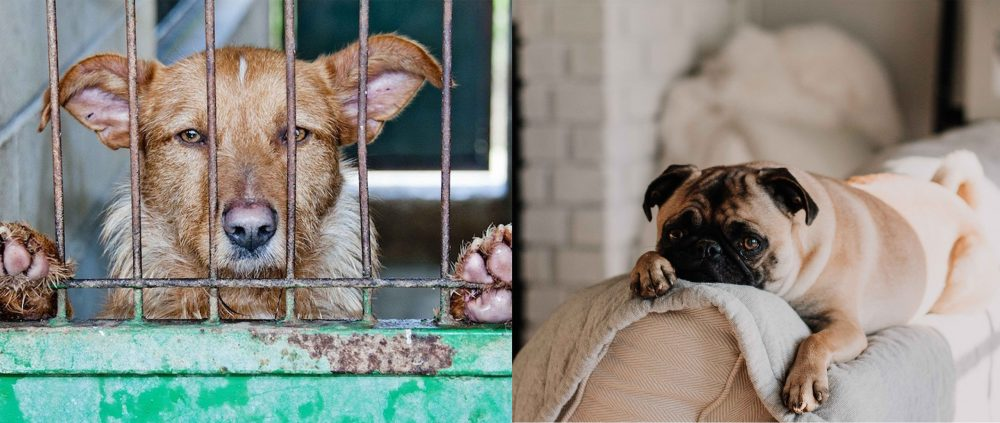 Pet in Vietnam – Dark and Bright sides of the picture