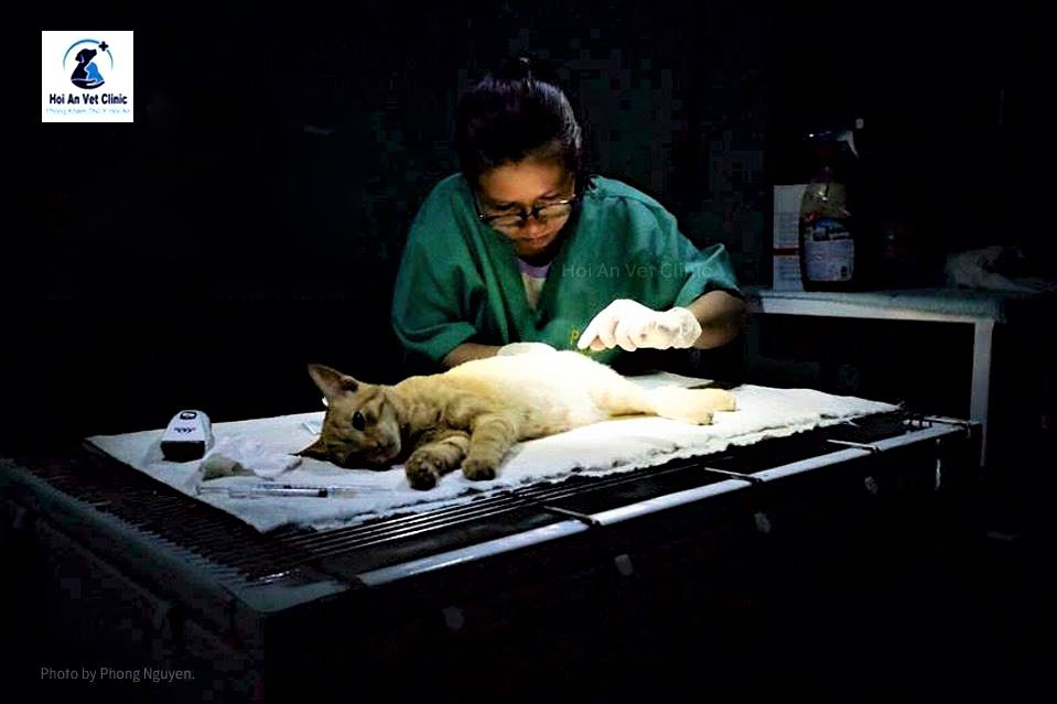 A reliable pet hospital in Hoi An