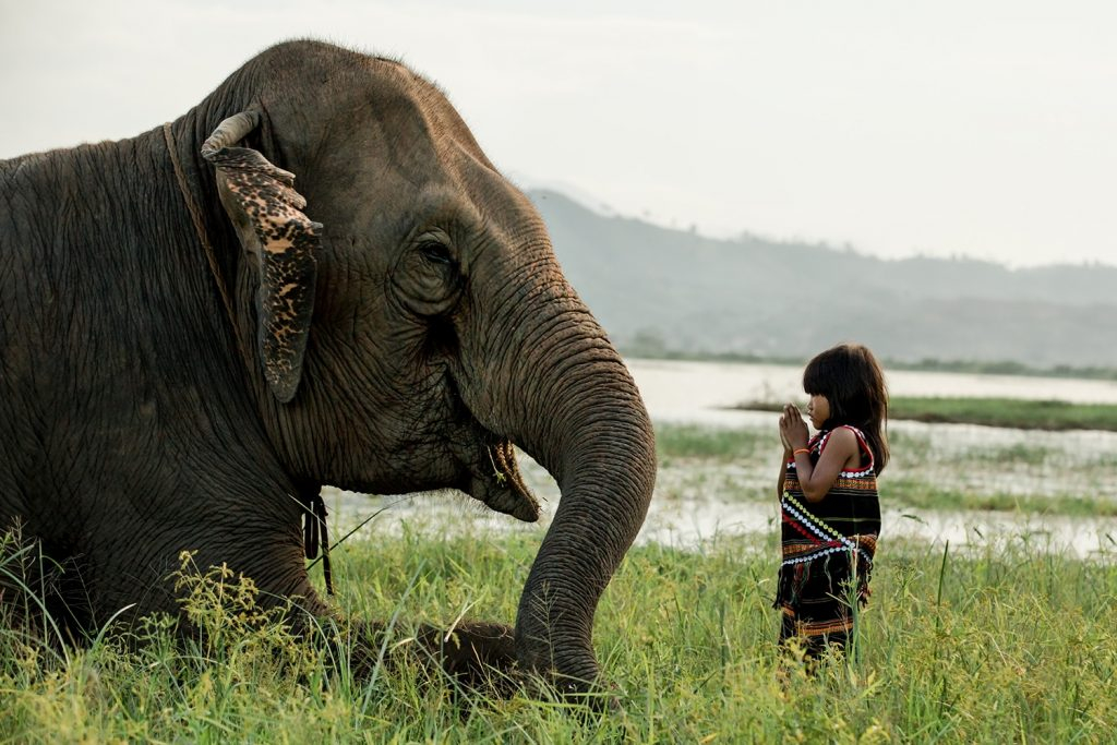 visit vietnam in march buon don elephant