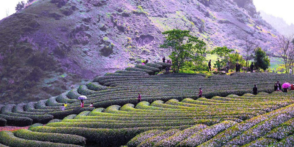 visit vietnam in march tea hill