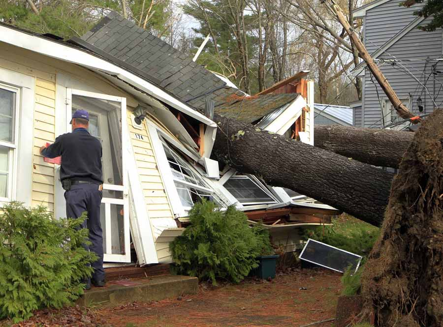 cut big trees down before storm comes or it destroys your house
