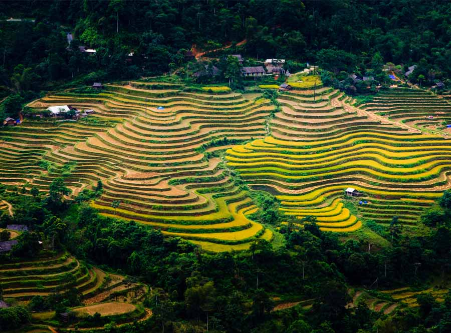 hoang su phi is a rice terrace in the north point of vietnam teritory