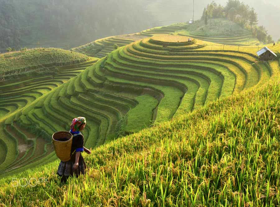 mu cang chai rice terrace is the most beautiful one in vietnam