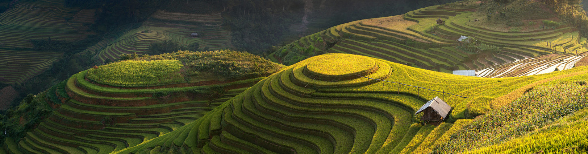Come to see the amazing Vietnam rice terrace this September